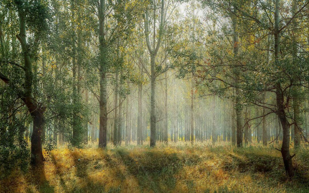Skov og natur i egen have