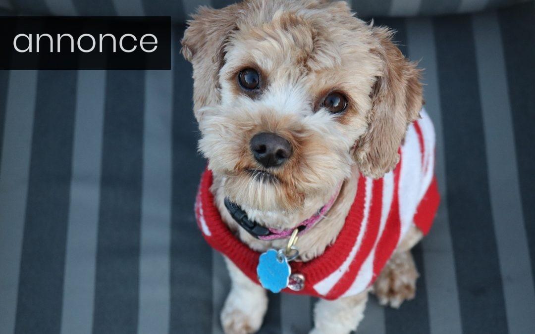 Gode råd og ideer til dansk hundetegn